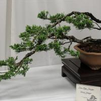 Pearl City Bonsai Club Exhibit & Plants Sale