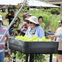 Senior Day at the Urban Garden Center in Pearl City (4/9/11)