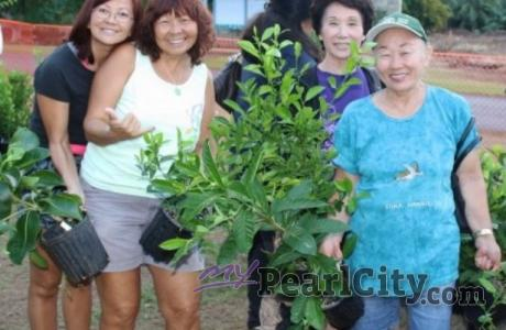 Hawaiian Electric Arbor Day Tree Giveaway, Sat. Nov.8