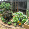 Foodscapes Hawaii incorporates PCHS compost into gardens of success